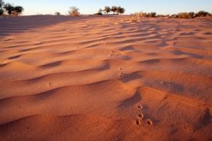 australian-desert-300