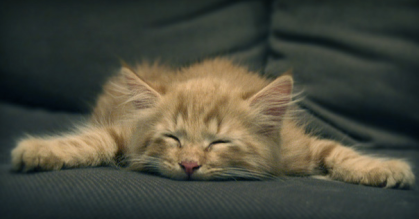 kitten tired